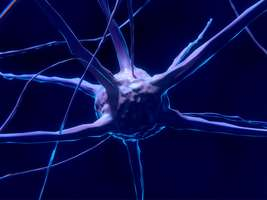 Active neurons, symbolizing brain agility
