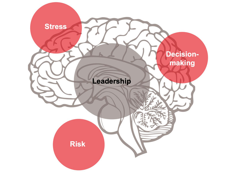 Diagram showing elements of NeuroLeadership